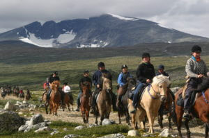 Snart kan guiden på rideturen fortelle mer om transporthistorien på Dovrefjell. Bilde: Hjerkinn Fjellstuen